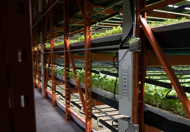 Racks of produce growing in the warehouse. Photo courtesy Deepwater Farms